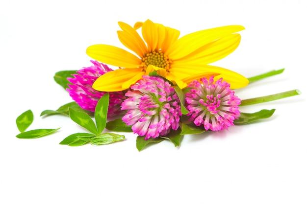 Цветы клевера и топинамбура, крупный план