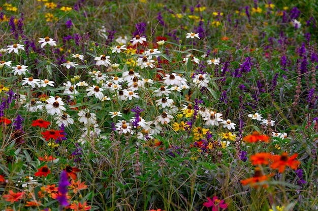 Разноцветные цветы выборочный фокус