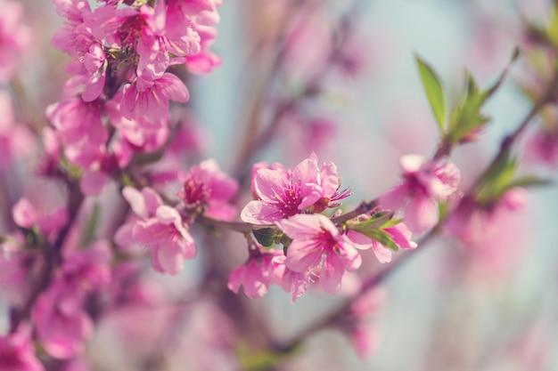 春の庭に咲く桜の花