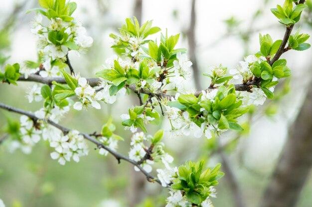 여름날 벚꽃의 꽃