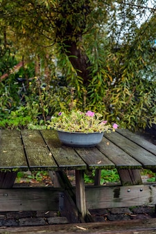 Flowers in an old basin on a wooden table among the dense green of trees. a cozy place to rest in nature. vertical.