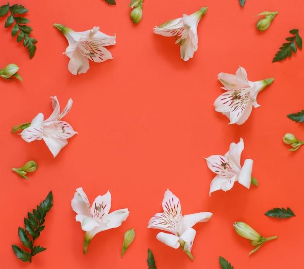 Цветы на красном фоне вид сверху