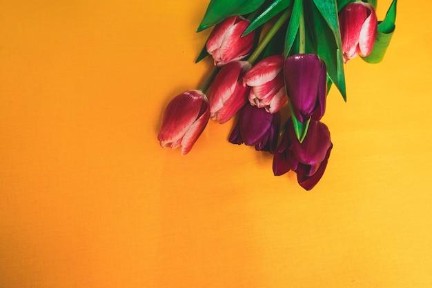 노란색 배경 클로즈업, 튤립, 빨간색, 보라색에 꽃