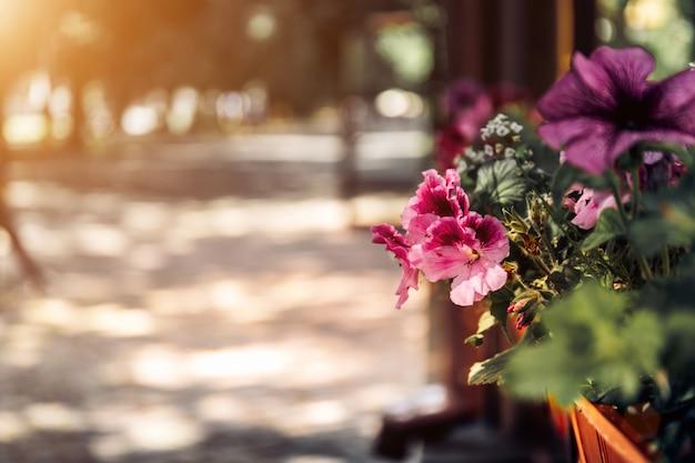 街の古いイタリアの通りの花。通りの背景がぼやけています。