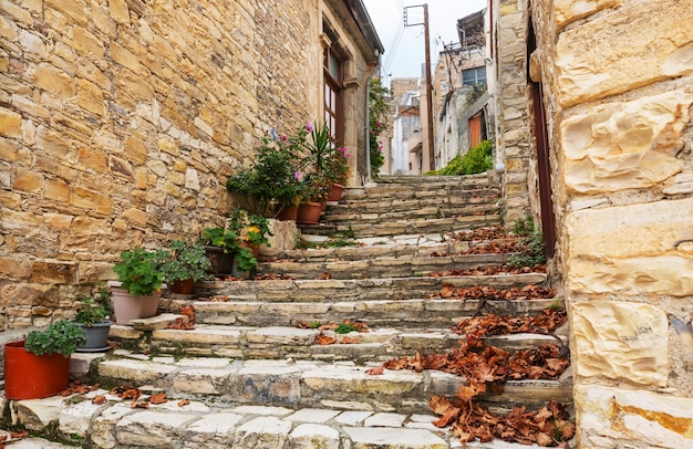 古い家々の間の狭い通りに花が咲く