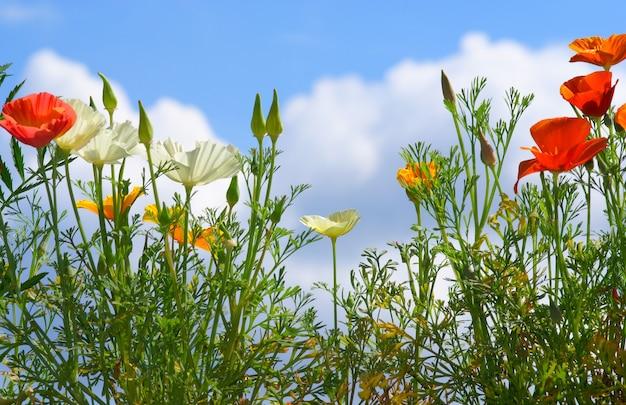 空の背景に花
