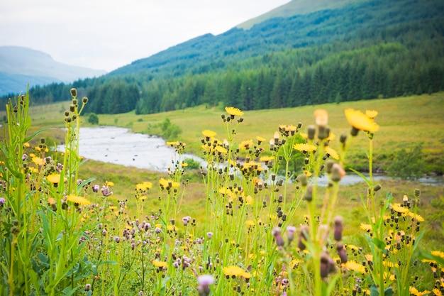 Цветы на летнем зеленом фоне в праздничных пейзажах