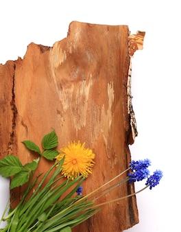 흰색 배경에 격리된 나무 껍질에 있는 꽃은 텍스트를 위한 공간이 있는 자연 봄 콜라주의 구성입니다.