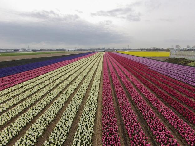 시골에 꽃
