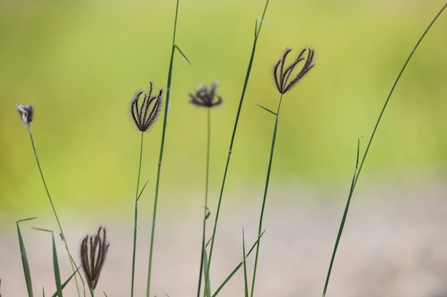 Flowers in the open grass. natural background