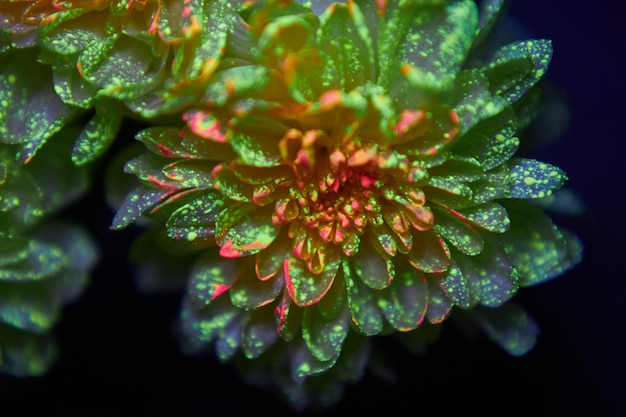 Flowers in the paint drops glow in the ultraviolet light. natural beauty cosmetics