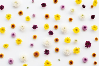 Flowers - pattern on white background.
