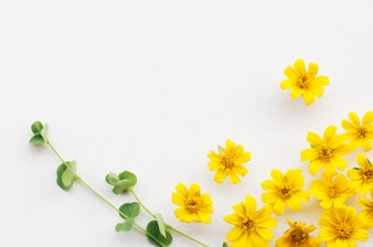 yellow flowers background flowers ideas for review