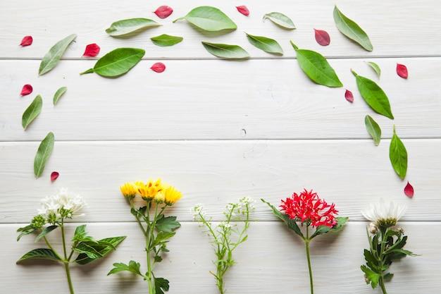 Fiori e petali in composizione Foto Gratuite