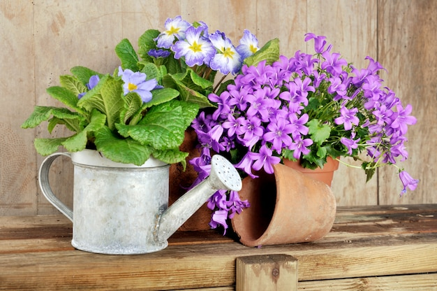 Flowers in pot on wooden table
