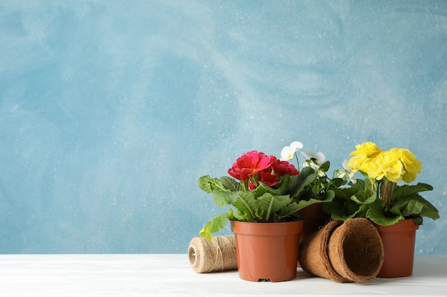 Flowers in pots against blue background, space for text