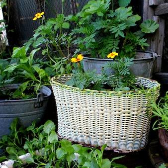 Flowers pots garden summer