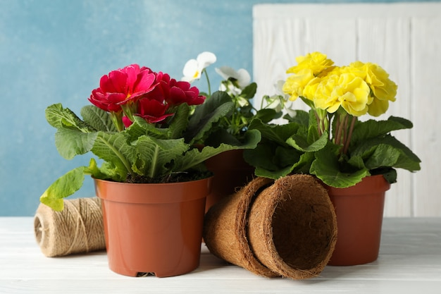 Flowers in pots on white wooden table, close up