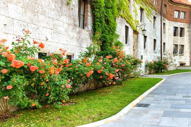 유럽에서 오래 된 거리에 꽃 빨간 장미.