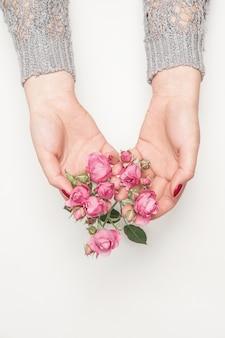 여자의 손에 꽃 장미, 평면도, 평면도, 흰색에 작은 분홍색 장미