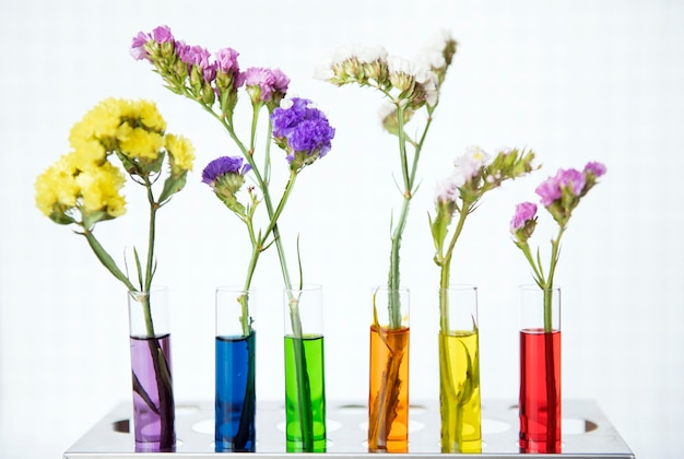 Flowers in a row of testubes with different colored water decoration and science experiment concept