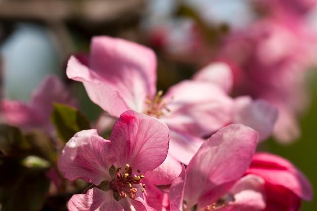 Flowers in the spring season