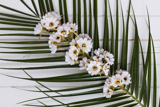 Flowers on stem of palm from above