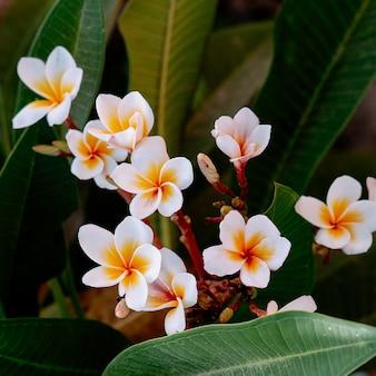 Flowers. tropical nature. vietnam