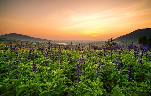 Цветы тюльпана фиолетового и красивые пейзажи. с лучами солнца.
