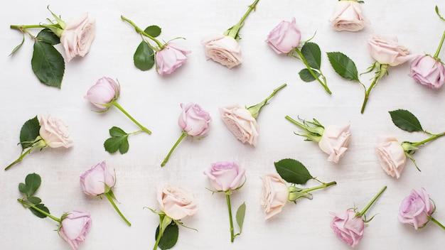 花バレンタインデーの構成。灰色の背景にピンクのバラ。フラットレイ、上面図。