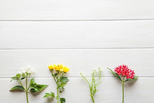 Fiori su tavolo bianco Foto Gratuite