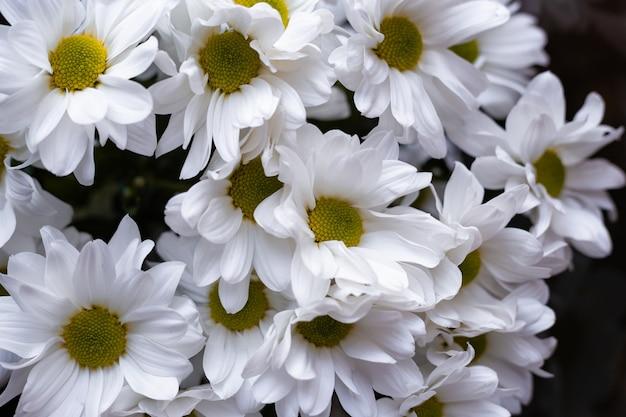 위에서 꽃 흰색 손질 클로즈업보기
