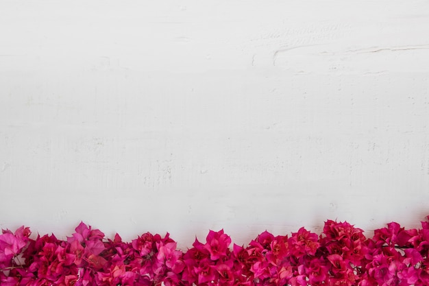 Flowers on white wooden background. empty space