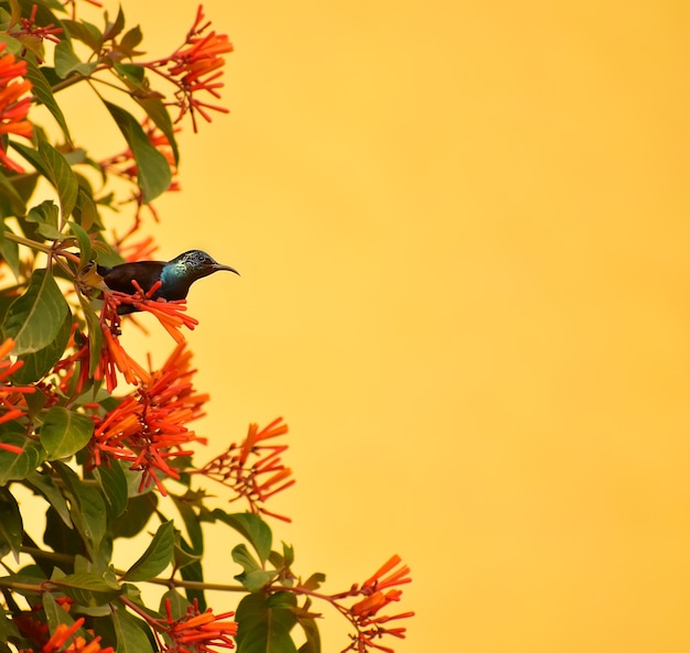 Flowers with bird for designing