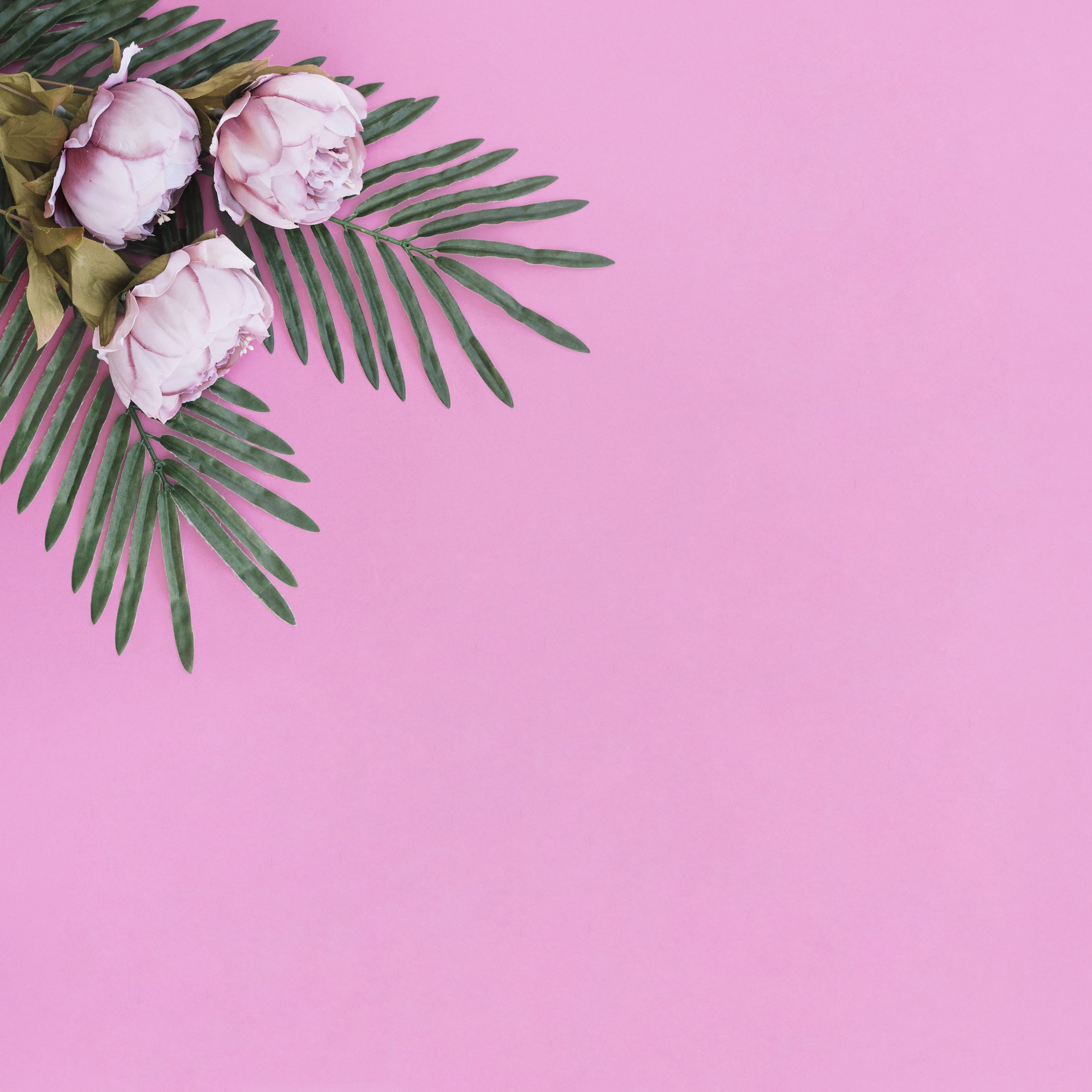 Flowers with leaves palm on pink frame background