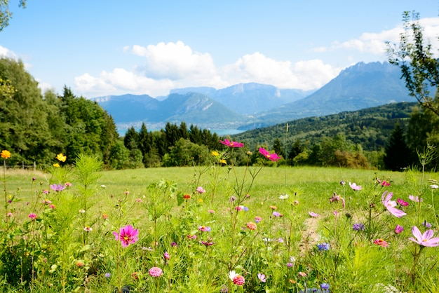 Flowers with mountains in the background