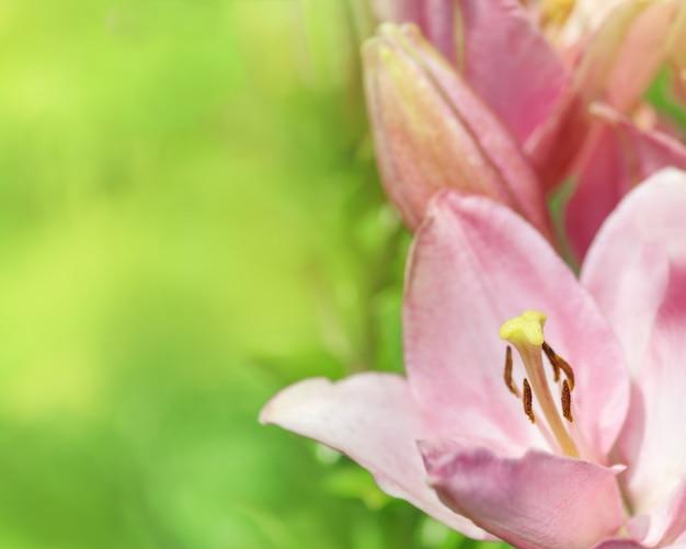 백합 꽃과 텍스트 복사 공간 꽃 배경.