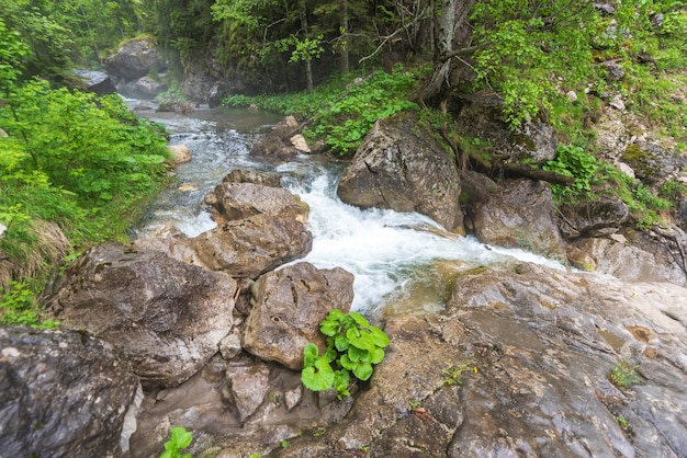 Flowing river in the carpathian mountains