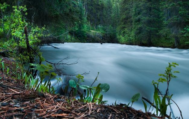 Текущая река в окружении высоких зеленых деревьев в лесу днем