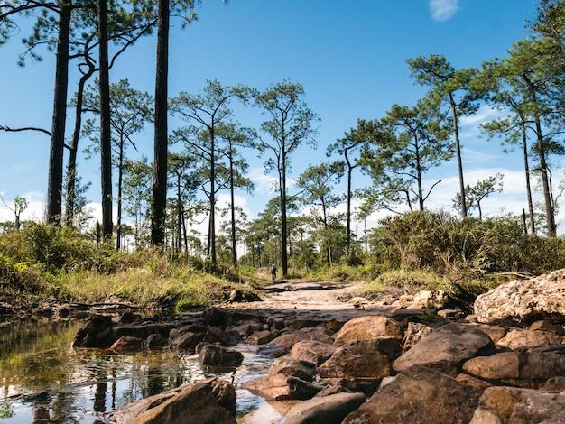 Течет вода, болото, лужа на горе. среди лесов и зелени