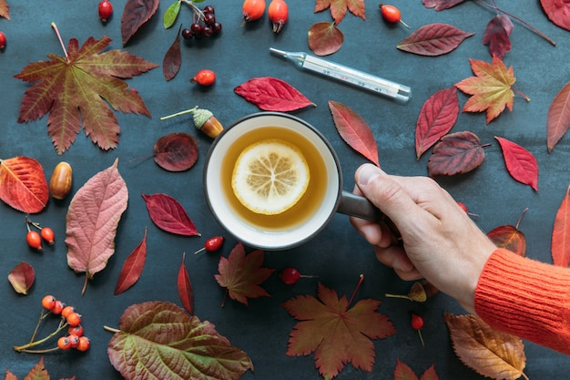 Flu season, cold concept. top view on male hand holding a cup of hot tea with lemon, autumn coloured leaves, ripe rosehip, hawthorn and rowan berries, digital thermometer, grunge navy blue surface.