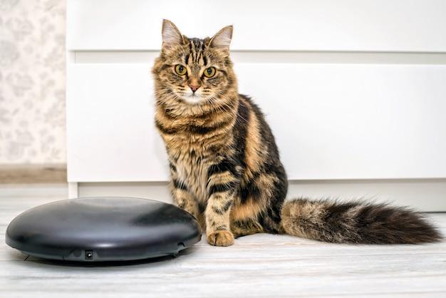 Пушистый красивый милый котик рядом с роботом-пылесосом