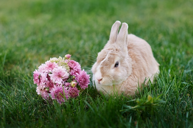 Fluffy bunny and a bouquet of flowers on the grass