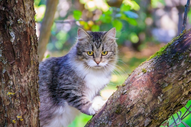 Fluffy cat is sitting on a tree branch.