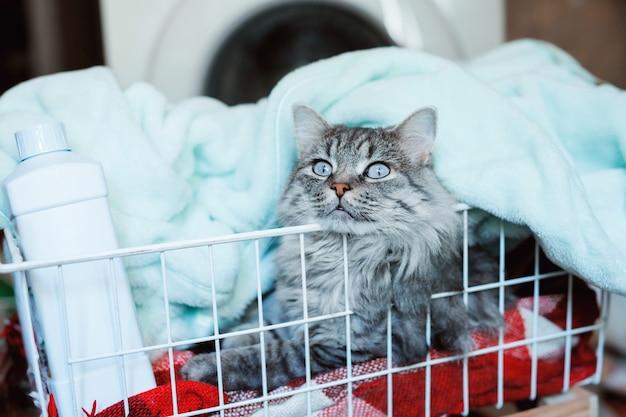 ふわふわの猫は汚れた洗濯物のバスケットに横たわっています。
