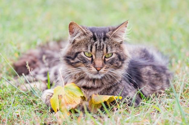 ふわふわの猫が黄色の葉の近くの草の上に横たわっています