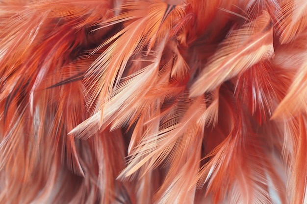 Fluffy of chicken feathers in soft and blur style, abstract art