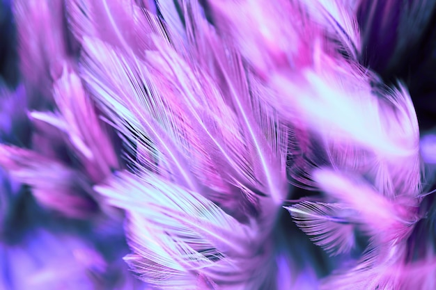 Fluffy of chicken feathers in soft and blur style  background, abstract art