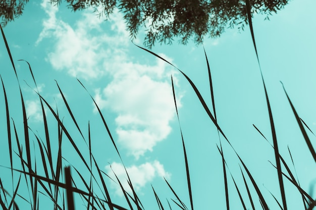 나무와 갈대 사이 청록색 하늘에 솜털 구름. 자연 풍경입니다. 공간을 복사합니다.
