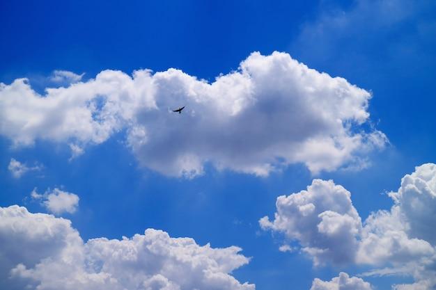 Пушистые кучевые облака, плавающие на голубом небе, летающая птица